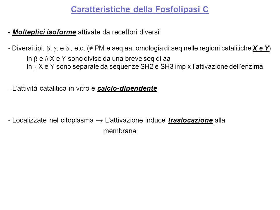 Caratteristiche della Fosfolipasi C