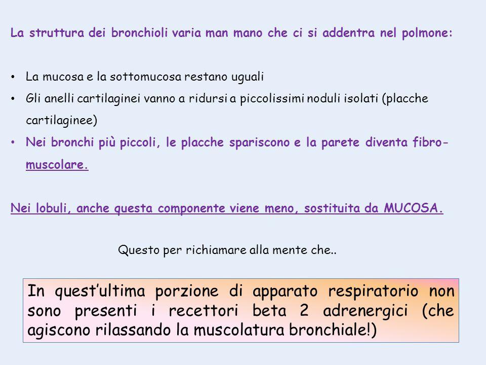 La struttura dei bronchioli varia man mano che ci si addentra nel polmone: