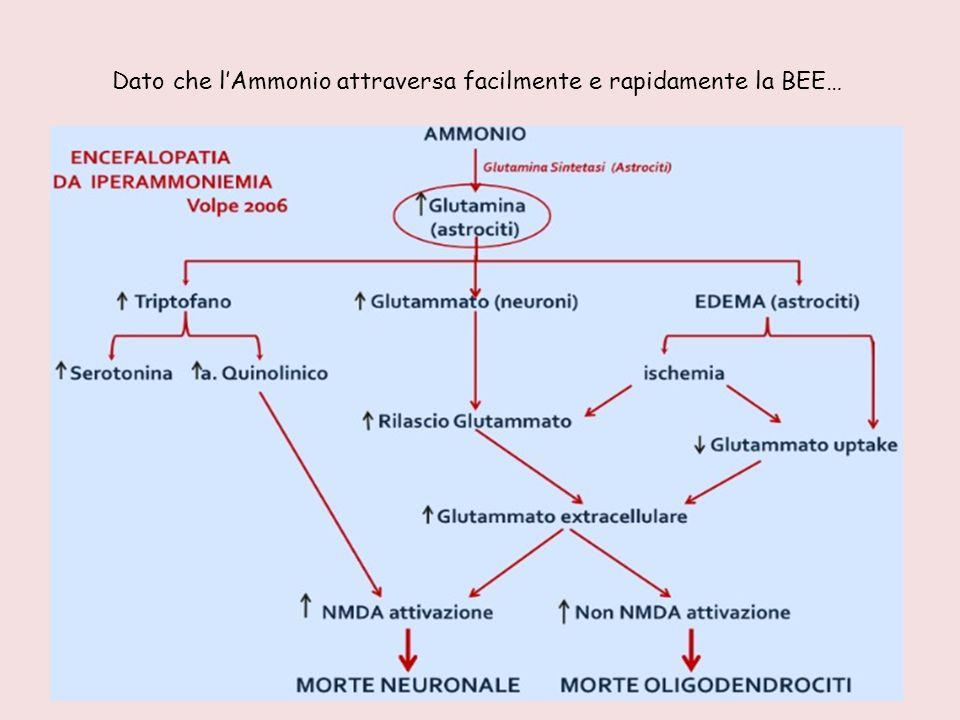 Dato che l'Ammonio attraversa facilmente e rapidamente la BEE…