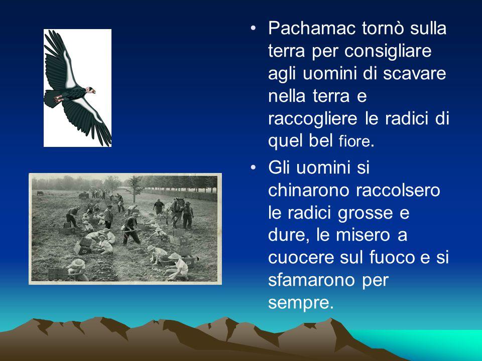 Pachamac tornò sulla terra per consigliare agli uomini di scavare nella terra e raccogliere le radici di quel bel fiore.