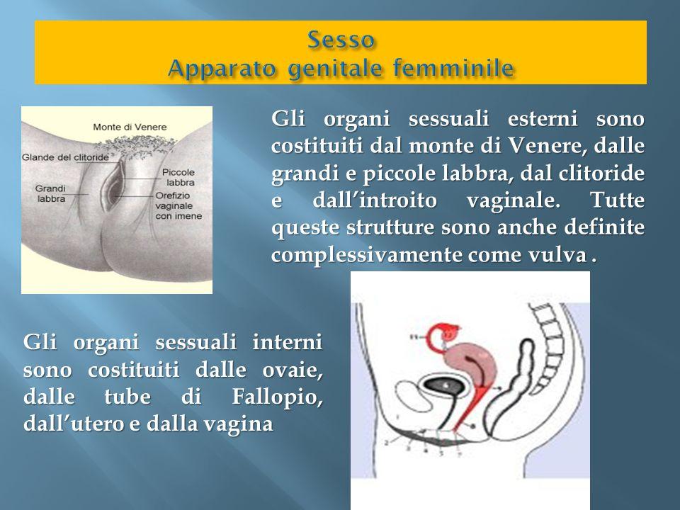Sesso Apparato genitale femminile