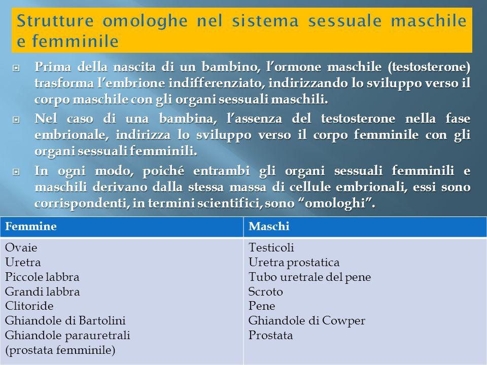 Strutture omologhe nel sistema sessuale maschile e femminile