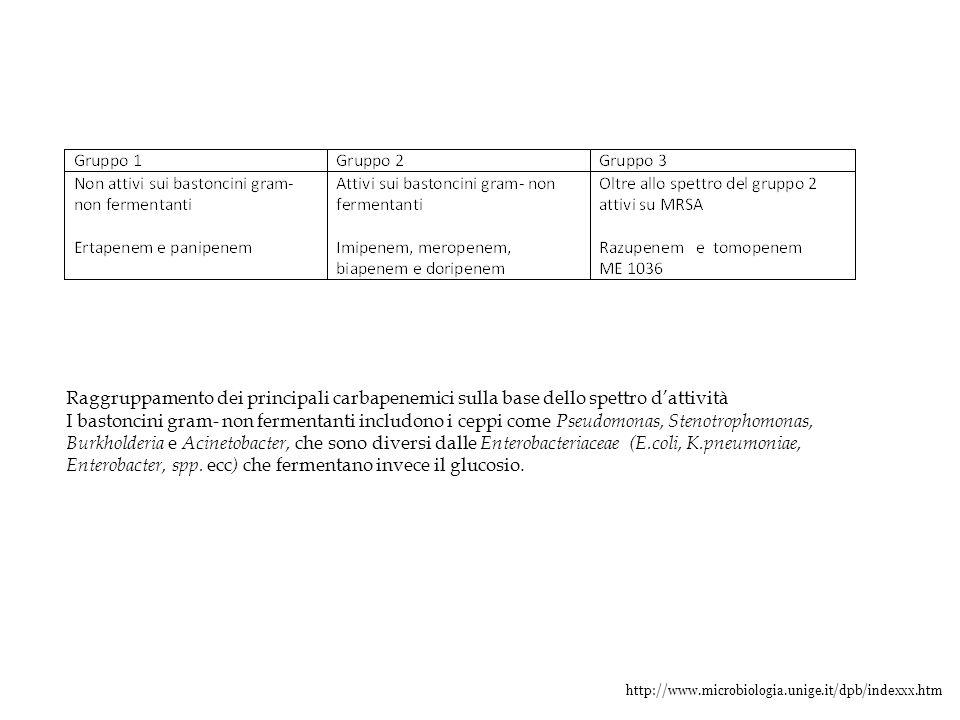Enterobacter, spp. ecc) che fermentano invece il glucosio.