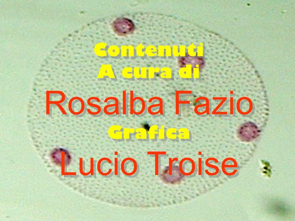 Contenuti A cura di Rosalba Fazio Grafica Lucio Troise
