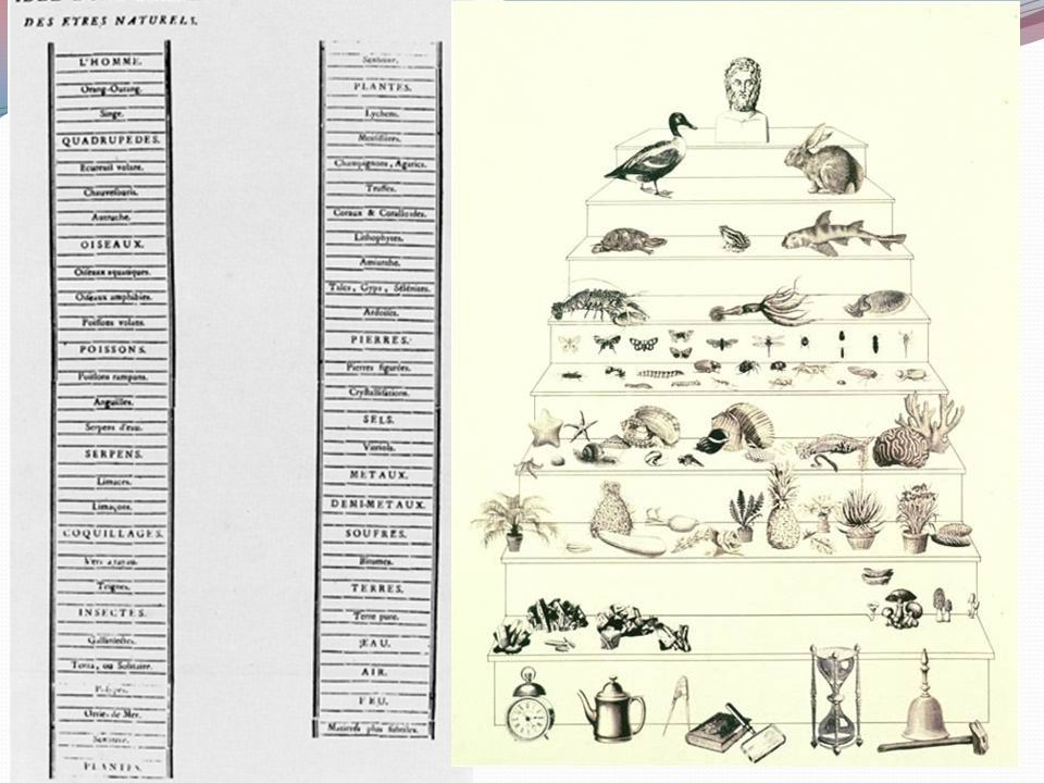 La scala naturae Col termine di Scala Naturae si intende l'ordinamento degli esseri viventi in funzione della loro complessità.