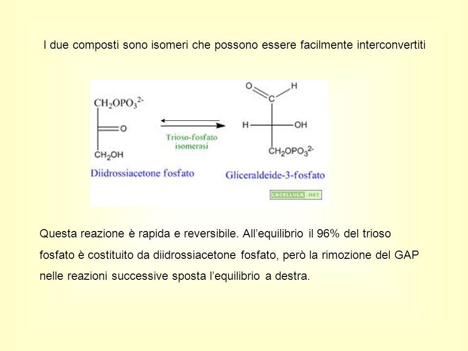 I due composti sono isomeri che possono essere facilmente interconvertiti