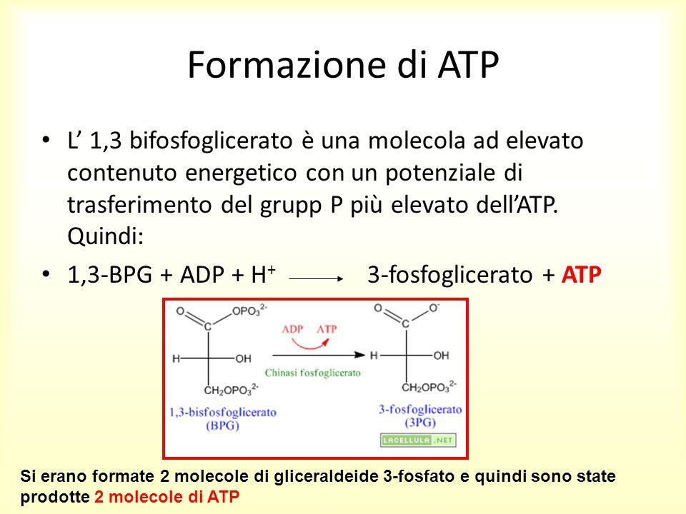 Formazione di ATP