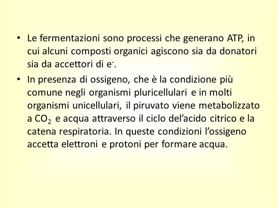 Le fermentazioni sono processi che generano ATP, in cui alcuni composti organici agiscono sia da donatori sia da accettori di e-.