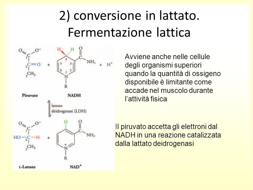 2) conversione in lattato. Fermentazione lattica