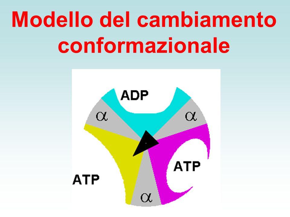Modello del cambiamento conformazionale