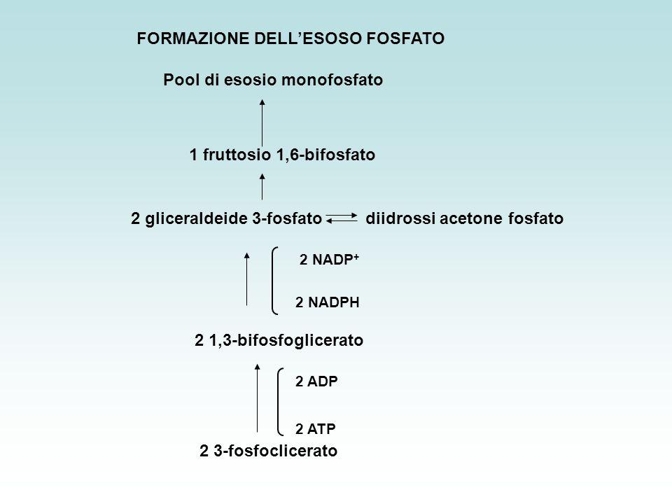 FORMAZIONE DELL'ESOSO FOSFATO