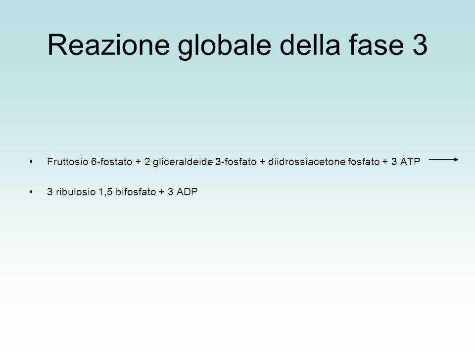 Reazione globale della fase 3