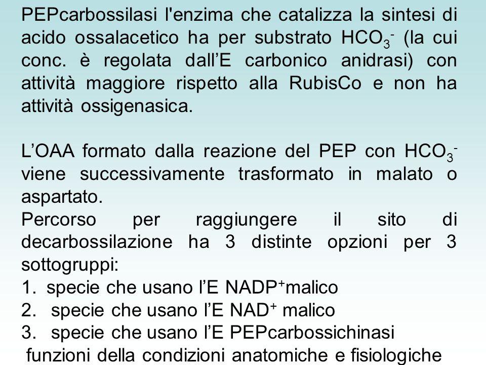 1. specie che usano l'E NADP+malico
