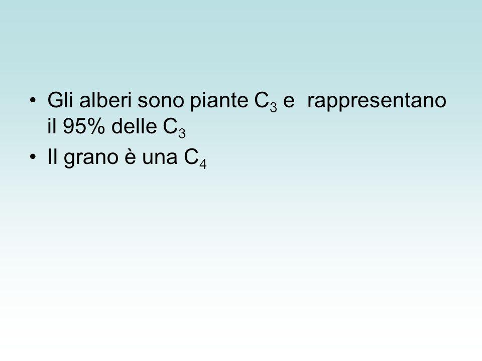 Gli alberi sono piante C3 e rappresentano il 95% delle C3