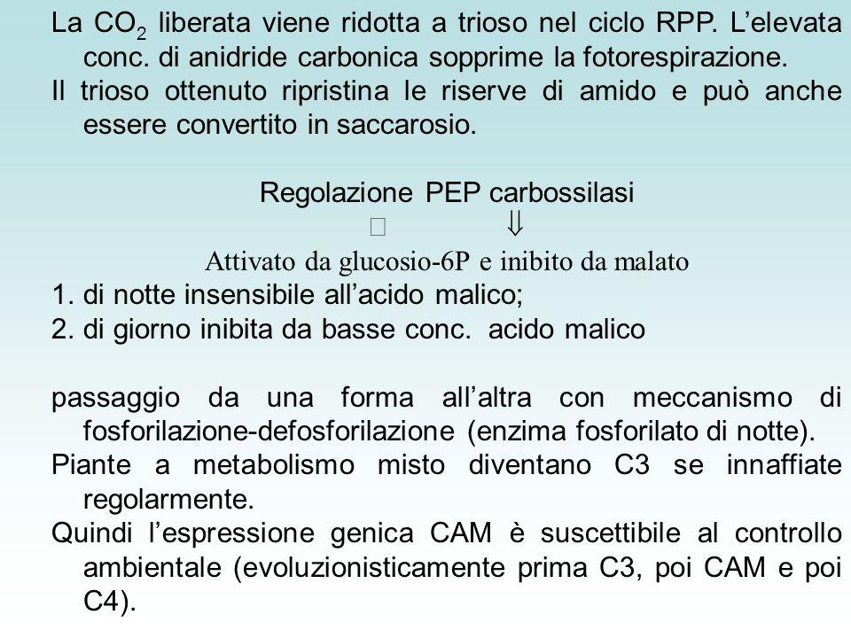 Regolazione PEP carbossilasi ß 