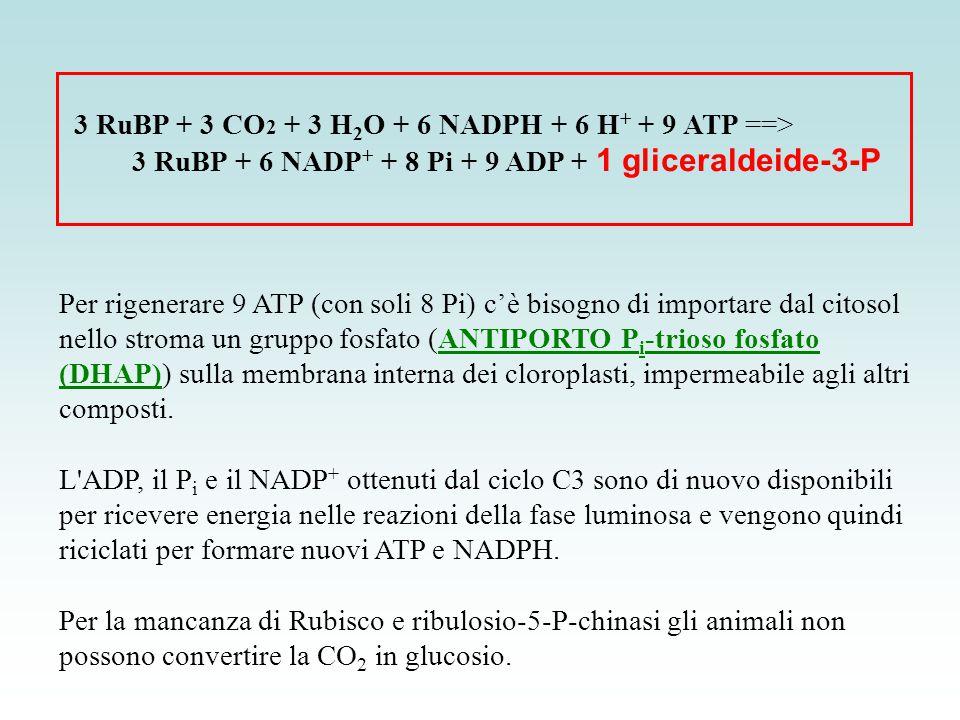 3 RuBP + 3 CO2 + 3 H2O + 6 NADPH + 6 H+ + 9 ATP ==>