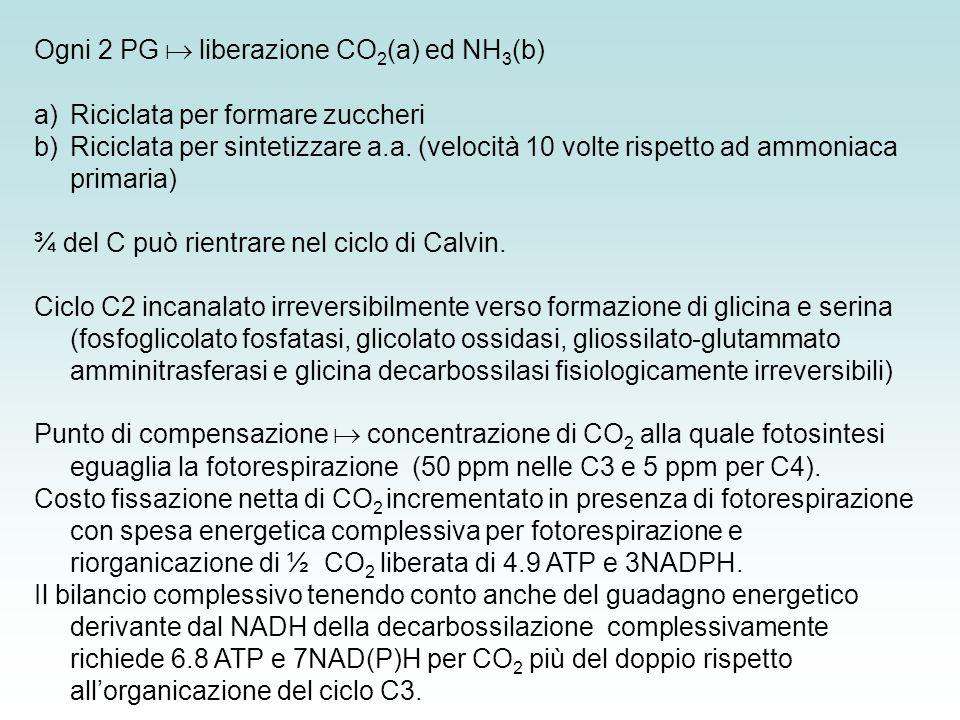 Ogni 2 PG  liberazione CO2(a) ed NH3(b)