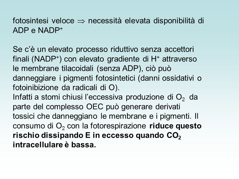 fotosintesi veloce  necessità elevata disponibilità di ADP e NADP+