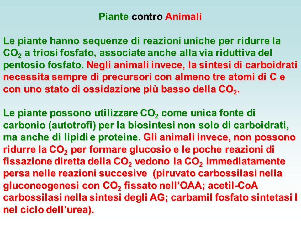 Piante contro Animali