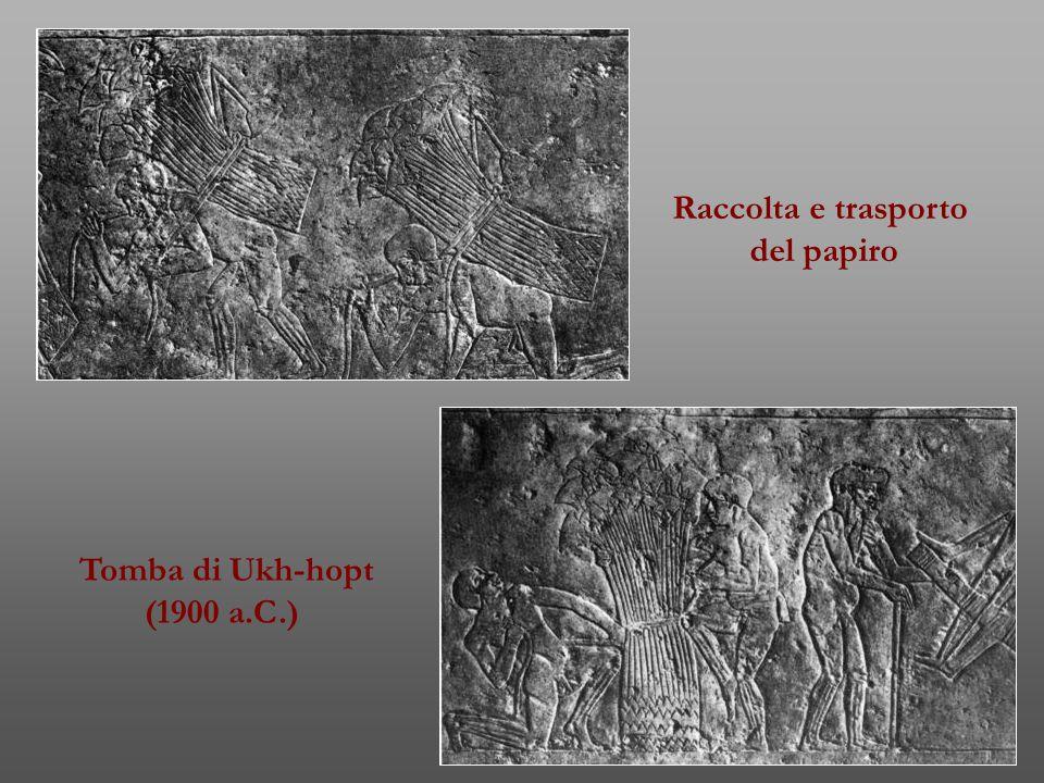 Raccolta e trasporto del papiro Tomba di Ukh-hopt (1900 a.C.)