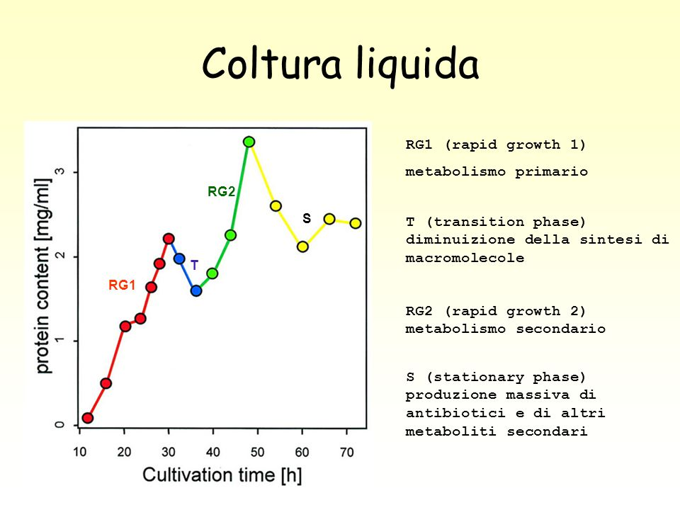 Coltura liquida RG1 (rapid growth 1) metabolismo primario
