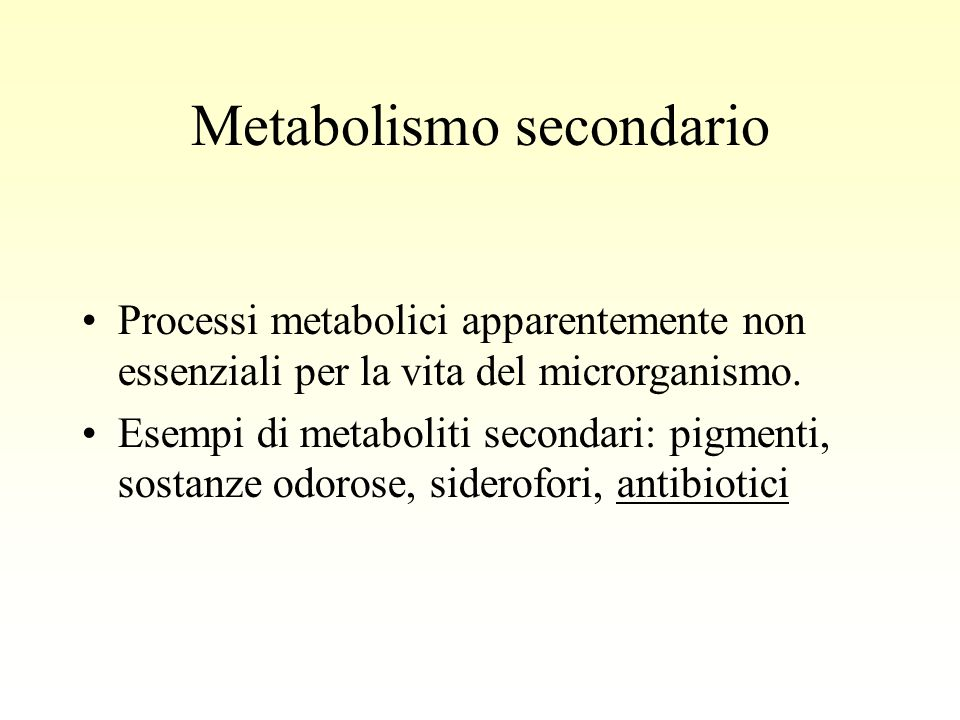 Metabolismo secondario