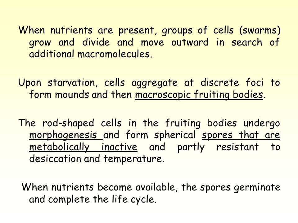 When nutrients are present, groups of cells (swarms) grow and divide and move outward in search of additional macromolecules.