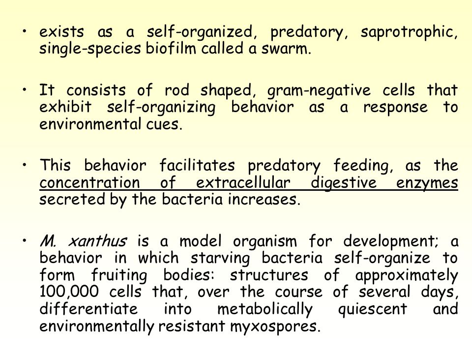 exists as a self-organized, predatory, saprotrophic, single-species biofilm called a swarm.
