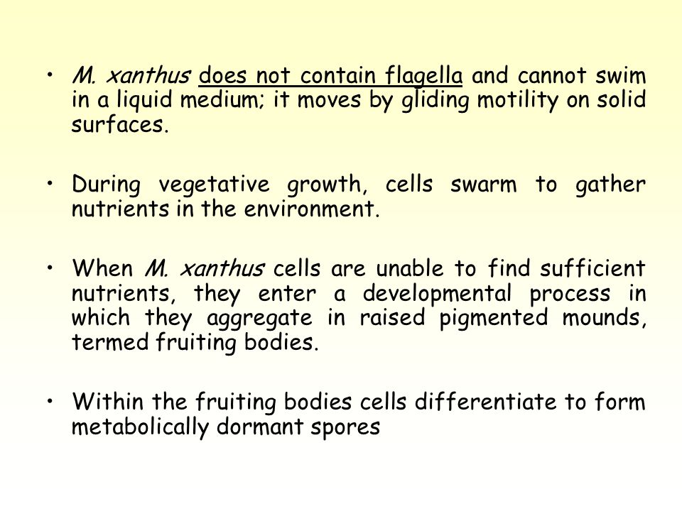 M. xanthus does not contain flagella and cannot swim in a liquid medium; it moves by gliding motility on solid surfaces.