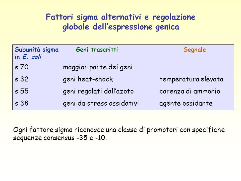 Fattori sigma alternativi e regolazione globale dell'espressione genica