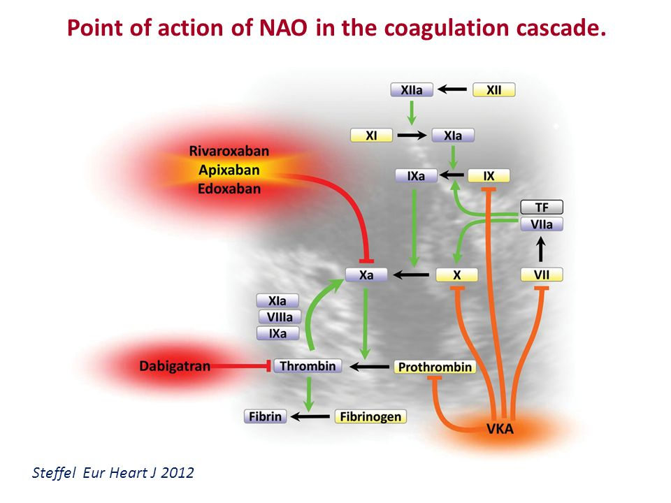 Point of action of NAO in the coagulation cascade.