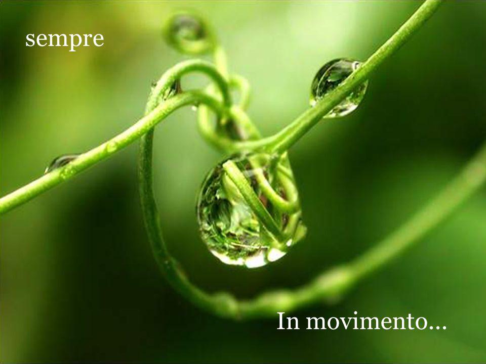 sempre In movimento...