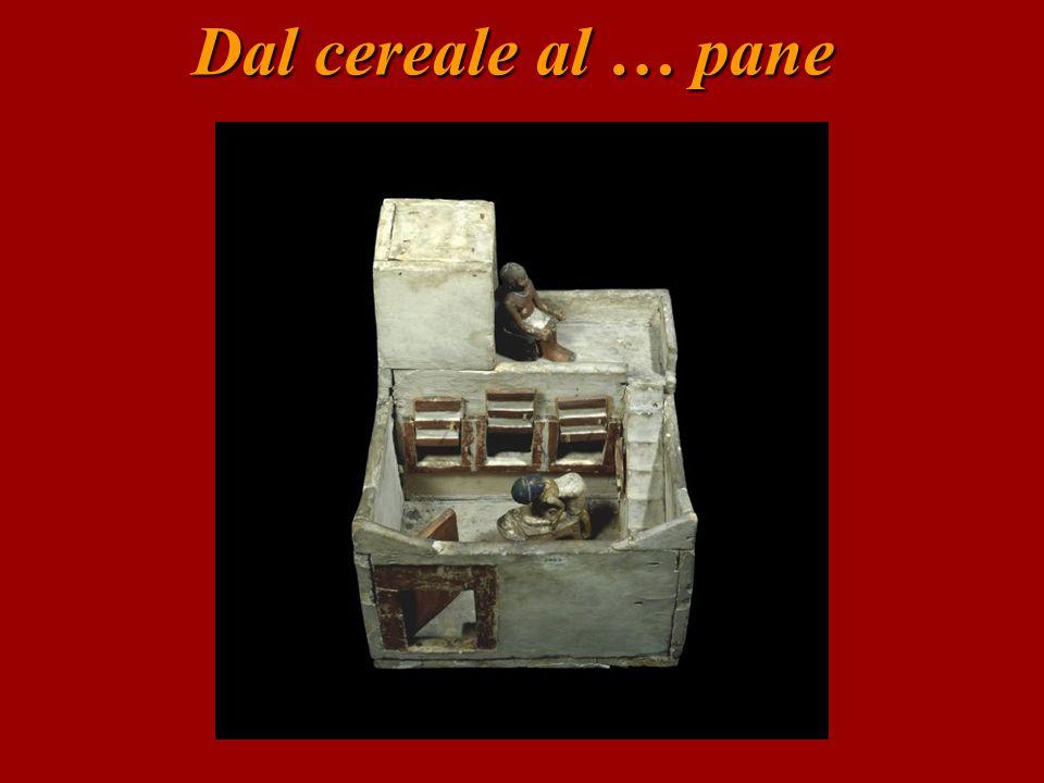 Dal cereale al … pane