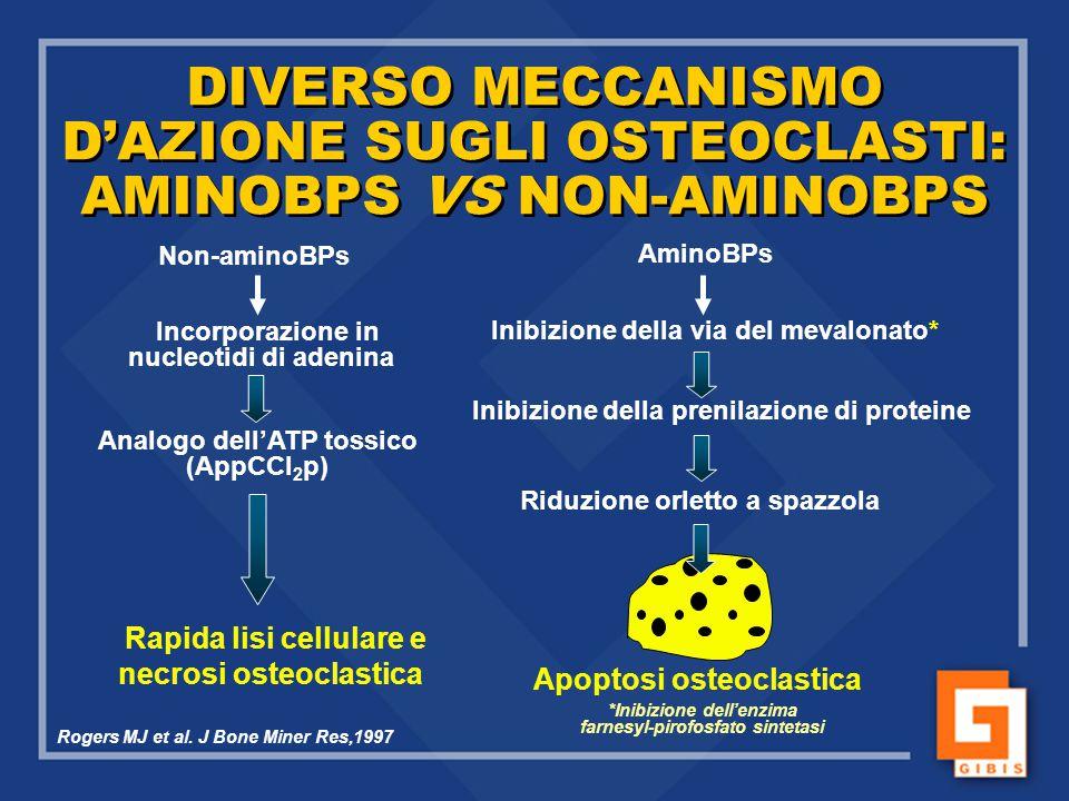 DIVERSO MECCANISMO D'AZIONE SUGLI OSTEOCLASTI: AMINOBPS VS NON-AMINOBPS