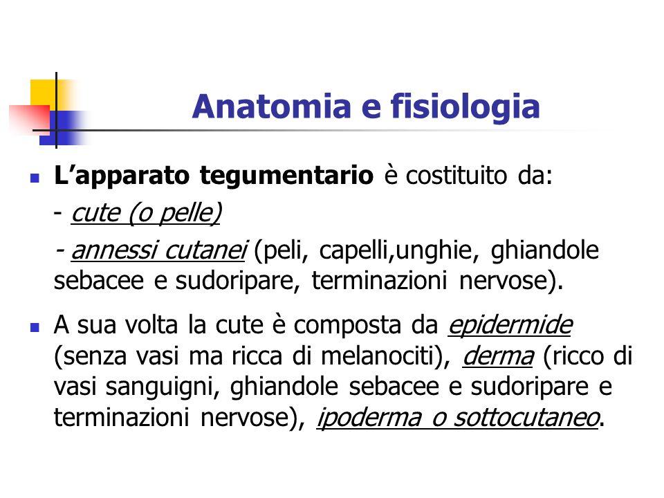 Anatomia e fisiologia L'apparato tegumentario è costituito da: