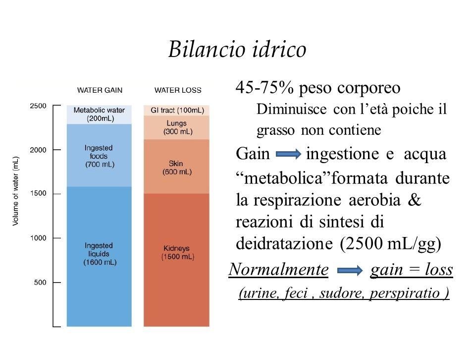 Bilancio idrico Gain ingestione e acqua metabolica formata durante