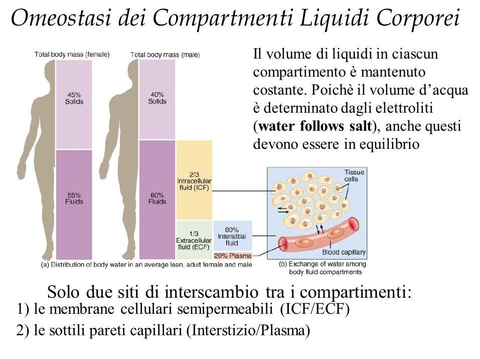 Omeostasi dei Compartmenti Liquidi Corporei