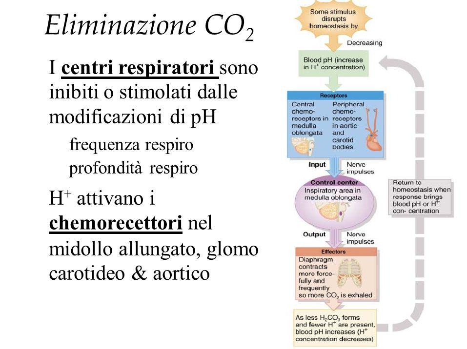 Eliminazione CO2 I centri respiratori sono inibiti o stimolati dalle