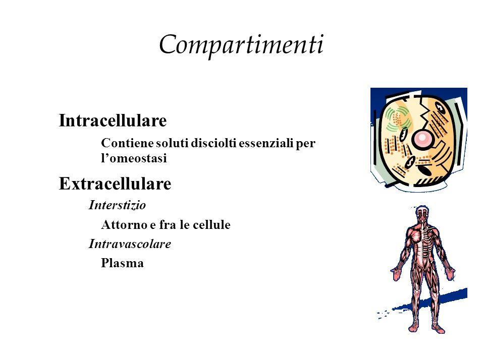 Compartimenti Intracellulare Extracellulare