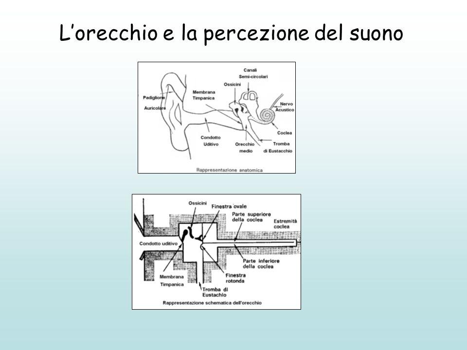 L'orecchio e la percezione del suono