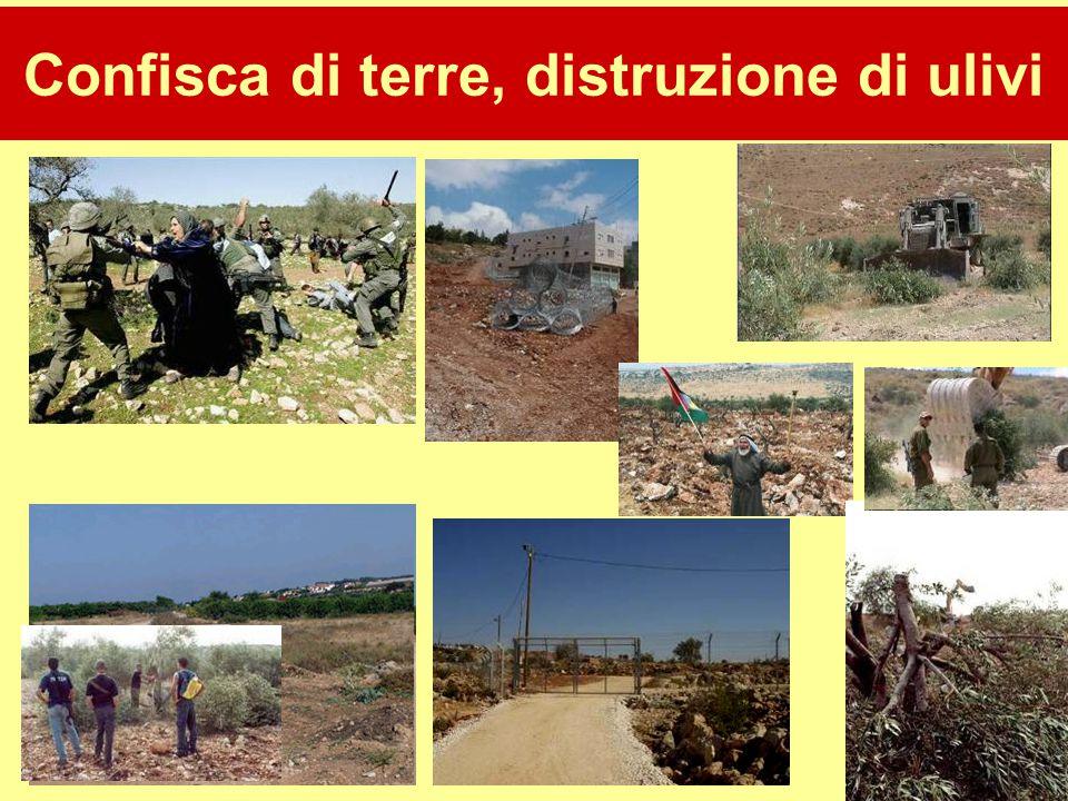 Confisca di terre, distruzione di ulivi