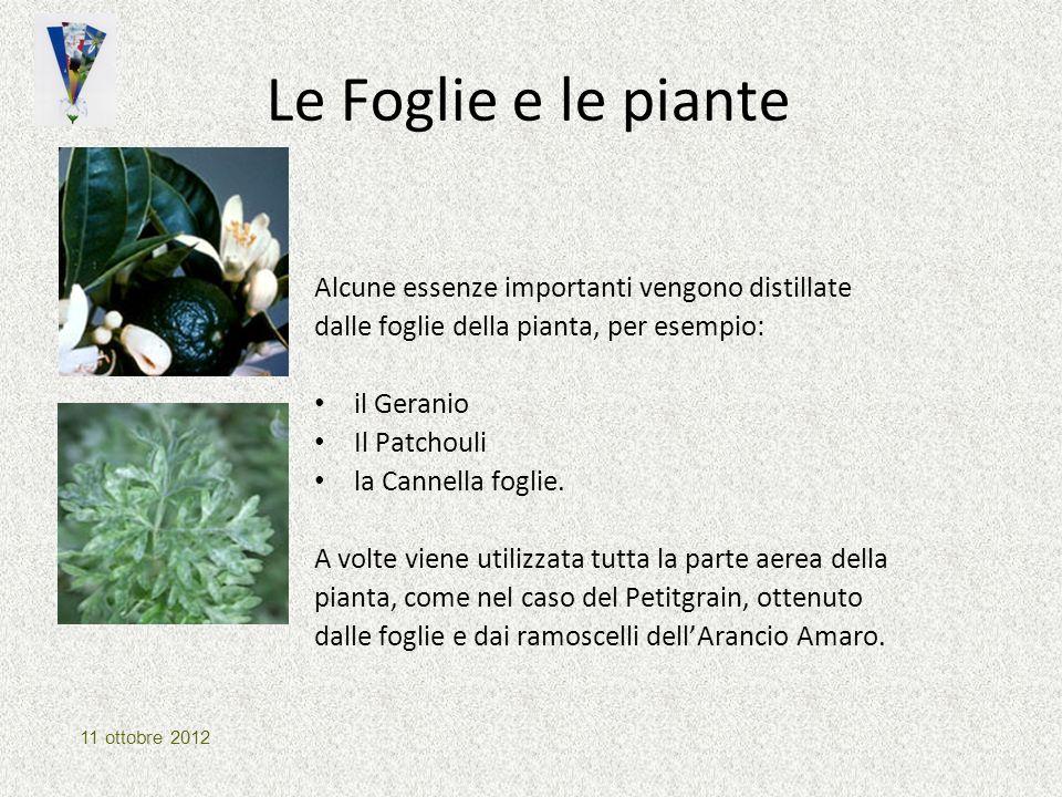 Le Foglie e le piante Alcune essenze importanti vengono distillate