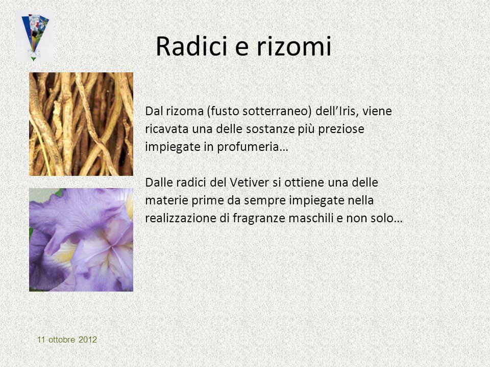 Radici e rizomi Dal rizoma (fusto sotterraneo) dell'Iris, viene