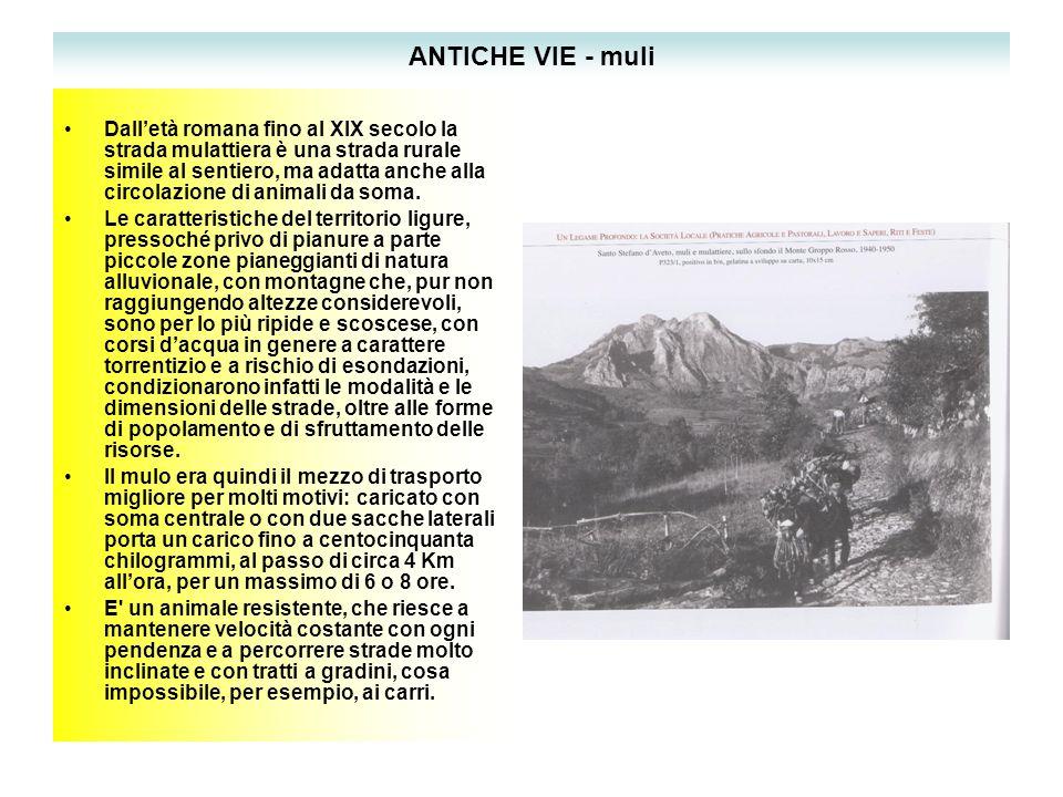 ANTICHE VIE - muli