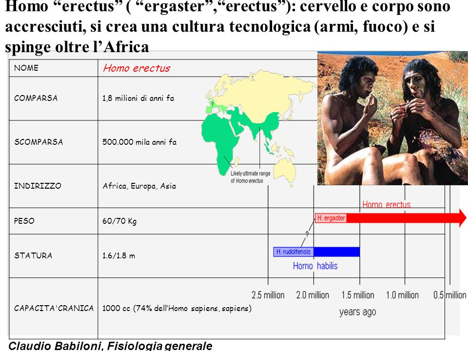 Homo erectus ( ergaster , erectus ): cervello e corpo sono accresciuti, si crea una cultura tecnologica (armi, fuoco) e si spinge oltre l'Africa