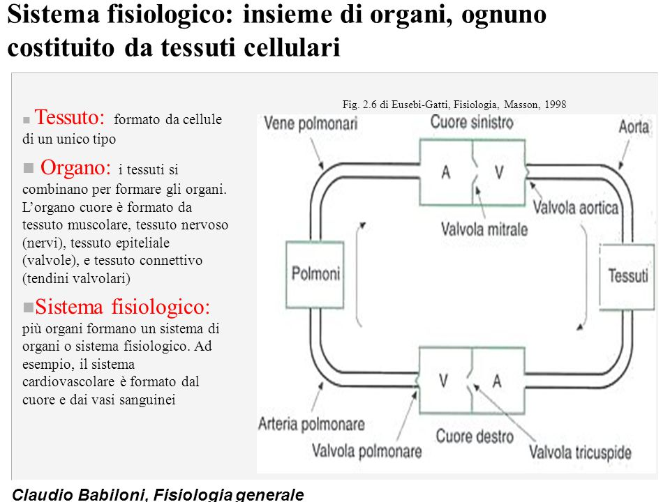 Fig. 2.6 di Eusebi-Gatti, Fisiologia, Masson, 1998