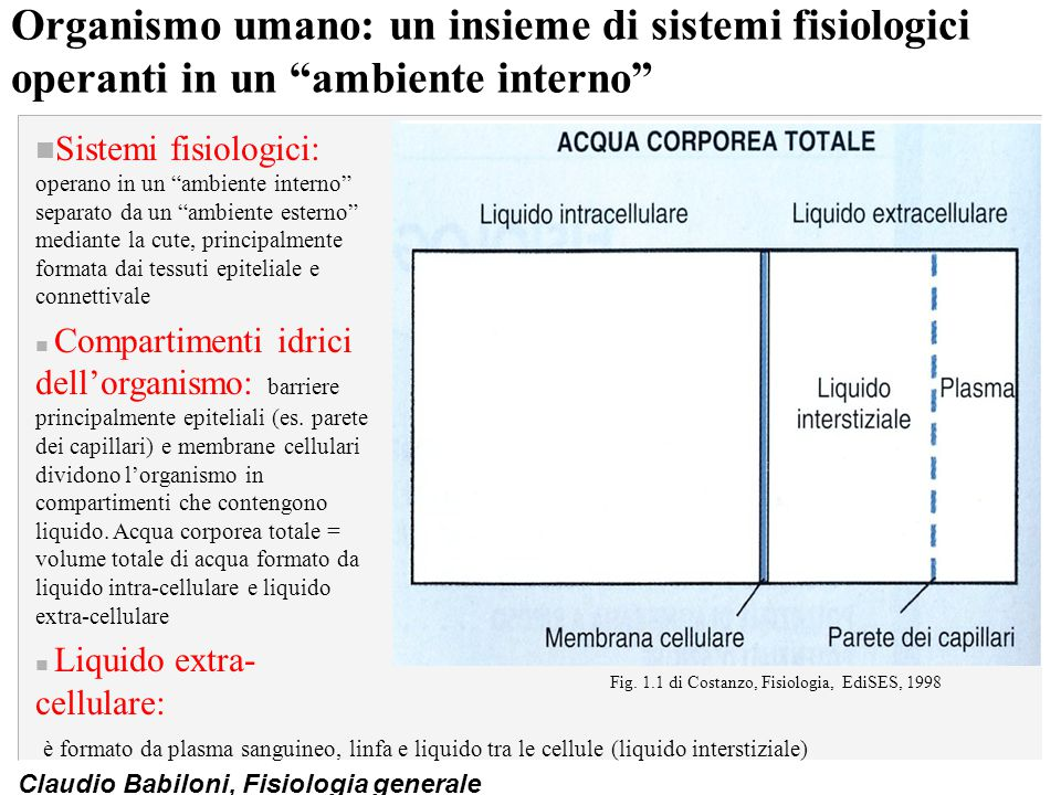 Fig. 1.1 di Costanzo, Fisiologia, EdiSES, 1998