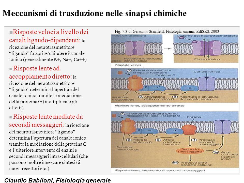 Meccanismi di trasduzione nelle sinapsi chimiche