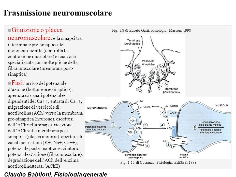 Trasmissione neuromuscolare
