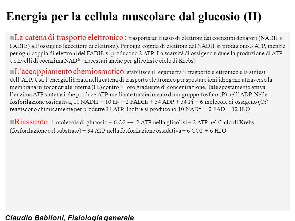Energia per la cellula muscolare dal glucosio (II)
